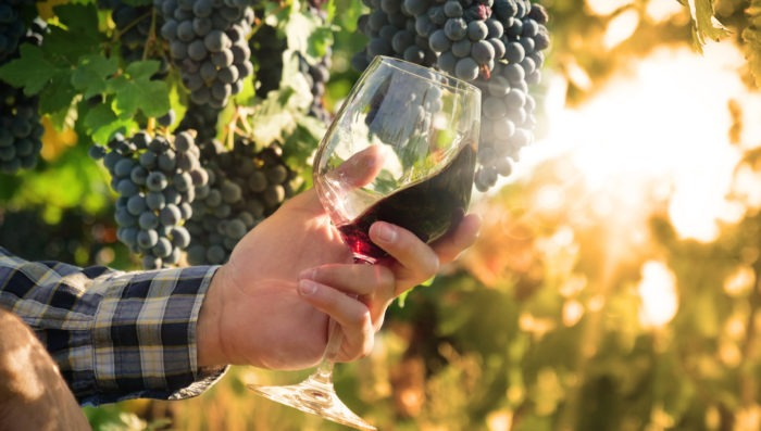 Man holding a glass of wine in vineyard