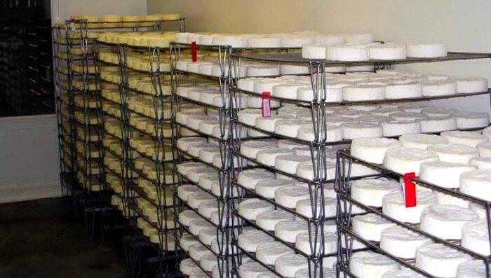 camembert cheese tour