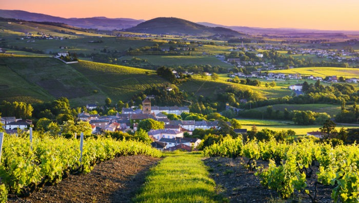 Beaujolais landscape with vineyards