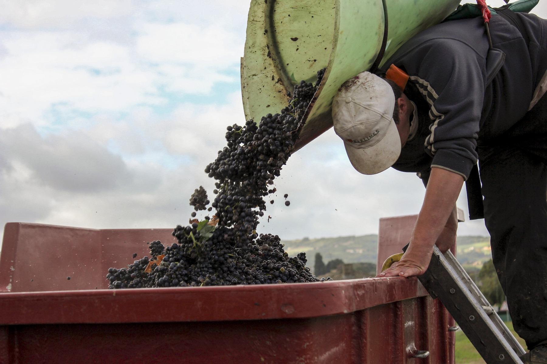 2021 grape harvest in france vendanges