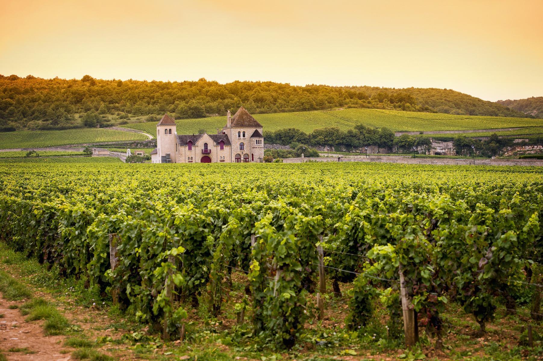 burgundy wine trails in fall